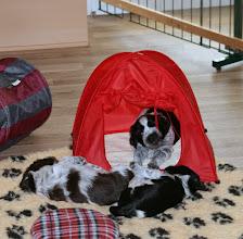 Photo: Ellie richtet schon mal das Camping-Zelt