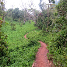 Photo: Up windy and slick trails in the rain forest