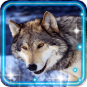 Wolf Photo HD Live Wallpaper icon