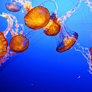 pixico jelly fish.jpg
