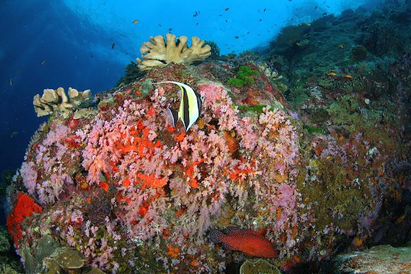 Discover abundant marine life at Christmas Point
