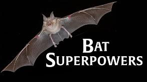 Bat Superpowers thumbnail