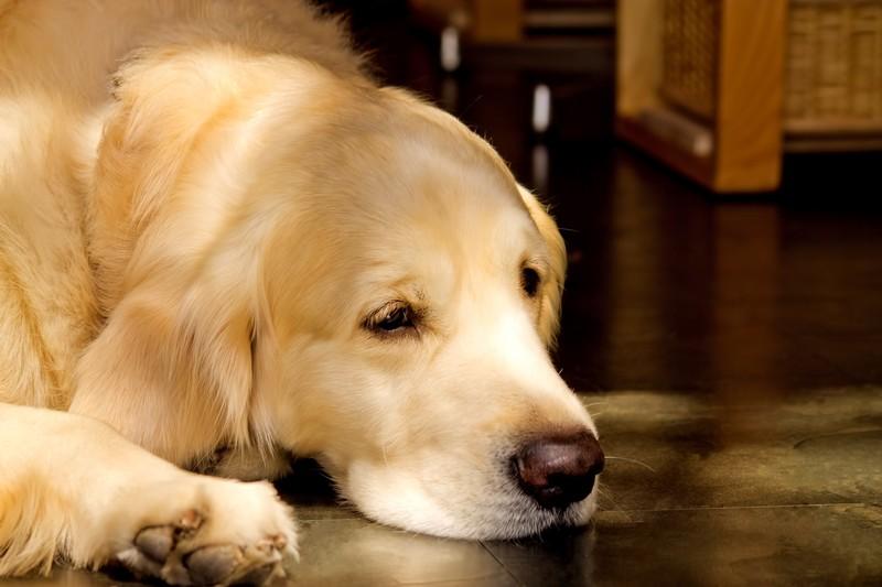 犬と考えるコミュニケーションロス・ナイン「黄金の戌年」#1