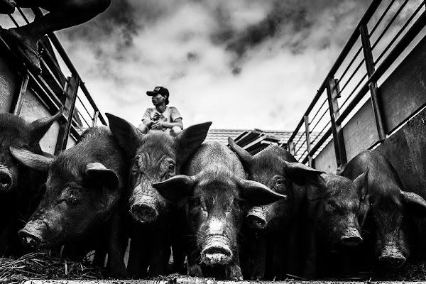 The Animal Market di enricodot