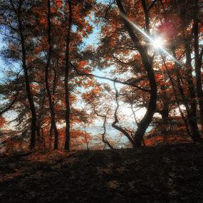 Contre-jour  d'automne by Ani Desu - Landscapes Forests (  )
