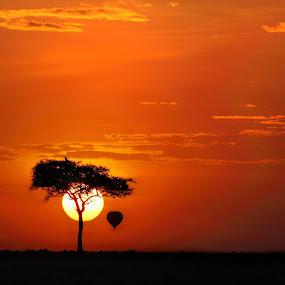 No ordinary life by Sue Green - Landscapes Sunsets & Sunrises ( safari. air ballon. travel .acacia,  )