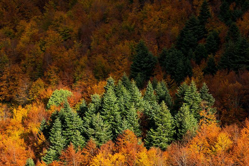 Luci ed ombre sull'autunno di LucaMonego