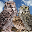 Wild Owl Bird Family Survival icon