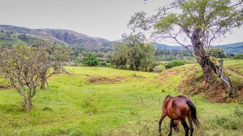 a horse grazing in samaipata bolivia