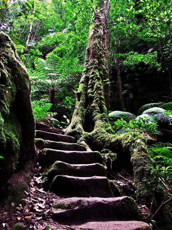 Nature's Path by Mike Mills - Landscapes Forests ( plant, green, track, moss, forest, leaves, bush walk, fern, stairs, nature, camping, australia, path, trees, bush, rocks, pwcpaths )