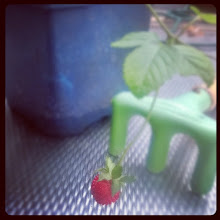 Photo: strawberry in the winter 2014