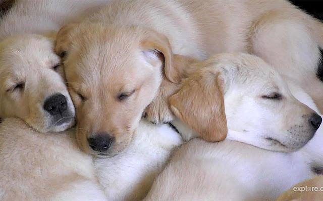 Puppy Tab