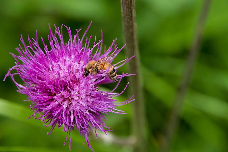 Un mondo di polline di Nikos