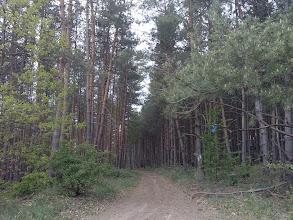Photo: Fenyves után nem sokkal jön a fordító 9,7 km