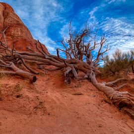 Red Sand by John Aavitsland - Landscapes Deserts ( oct, mojito, usa, red sand, desert )