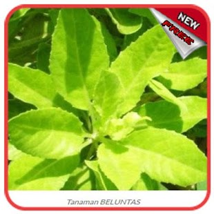 Traditional Medicinal Plants - náhled
