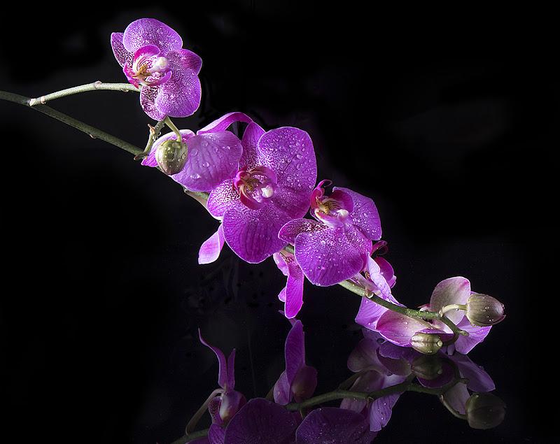 orchidea..modella di angelo27