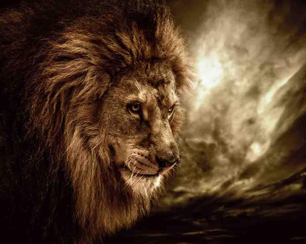 lion wallpapers hd android apps on google play