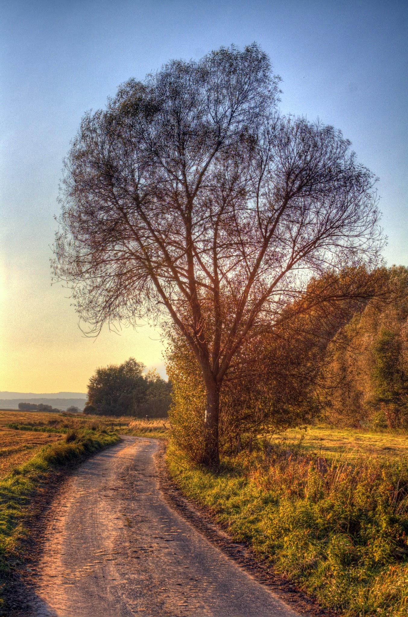 Photo: Herbst in Owl