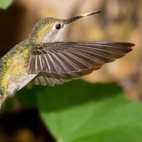 by Jim Malone - Animals Birds