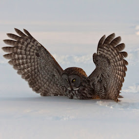 by Jocelyn Rastel-Lafond - Animals Birds