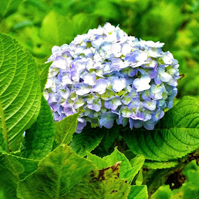 Macro bunga by Eka Astiputra - Flowers Single Flower ( bunga,  )