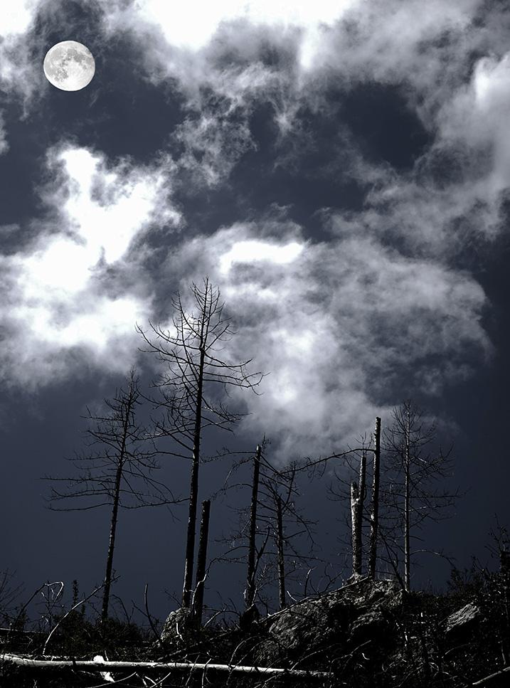 la foresta nera .... di Sergio Catitti