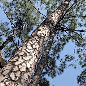longggg....!!!!! by Pratik Nandy - Landscapes Forests