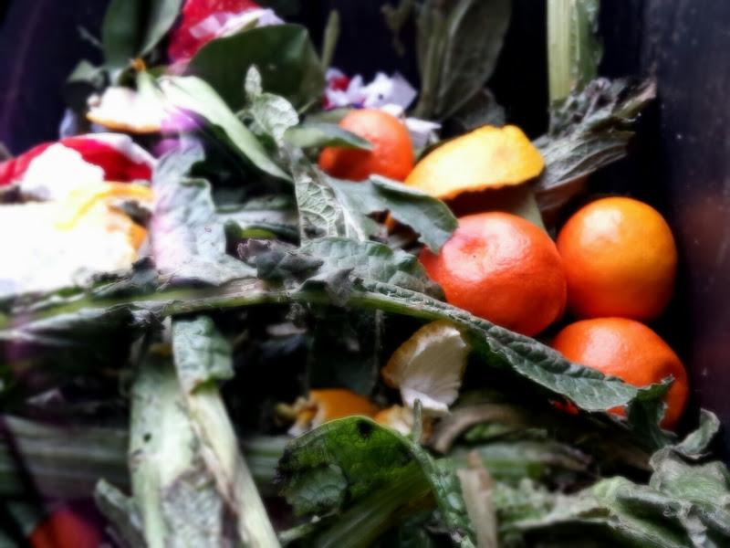 trash food di herbivorous_creature