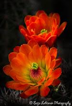 Photo: A beautiful Saturday to all.........:)  saija-lehtonen.artistwebsites.com  #cactusflower  #cactus  #flowerphotography  #flowerscolor  #floralphotography  #floraltoday  #southwestern  #southwest  #Arizona  #nature  #botanicalphotography