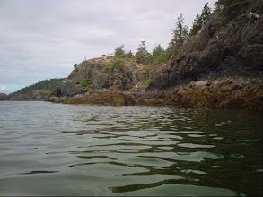 Photo: Seals on the rocks.
