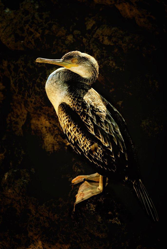 Il cormorano di Luca Gallozza