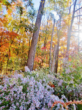 Photo: Purple flowers under orange and gold fall leaves at Hills and Dales Metropark in Dayton, Ohio.