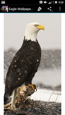 Eagle Wallpapers - screenshot