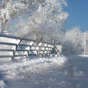 White as Snow by Sandra Hilton Wagner - Landscapes Weather ( fence, winter, cold, ice, snow, white, trees, walkway,  )