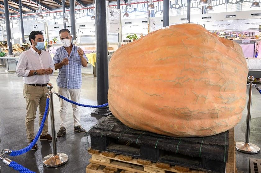 Una calabaza de 456 kilos en el Mercado Central