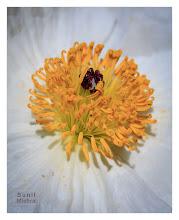 Photo: Eastern Sierras-20120717-652