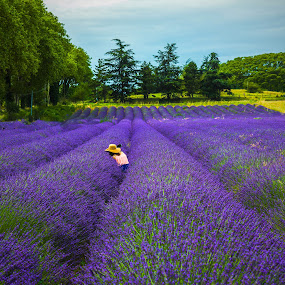 Selfie in Lavender Field by Arif Sarıyıldız - Landscapes Prairies, Meadows & Fields ( provence, selfie, france, colourful, purple flowers, travel, lavender, landscape )