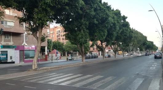 No habrá traslado de los ficus de la avenida del Mediterráneo