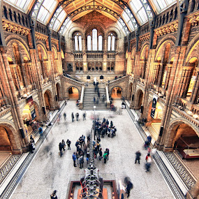 Natural History Museum by Dimitri Foucault - Buildings & Architecture Architectural Detail ( history, interior, museum, natural, pwcdetails-dq )