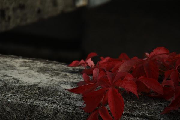 Rosso autunno di Gp
