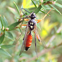 Male wasp