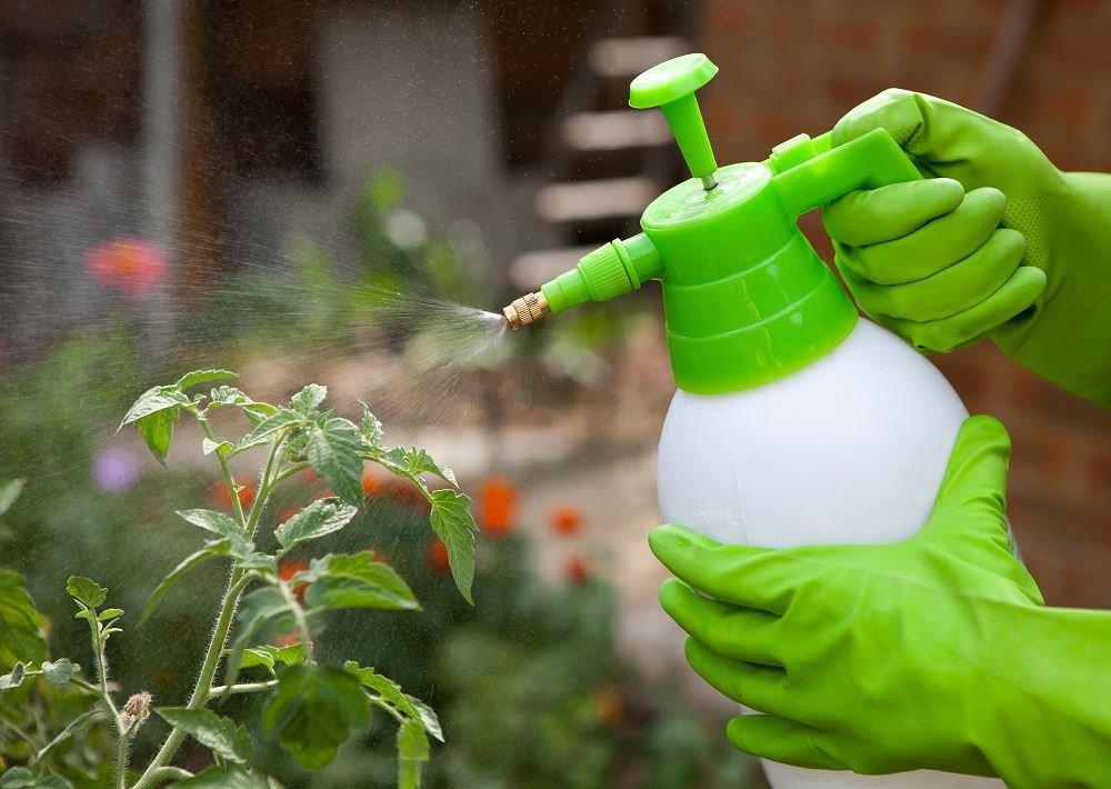 Какой механизм действия у биофунгицидов?