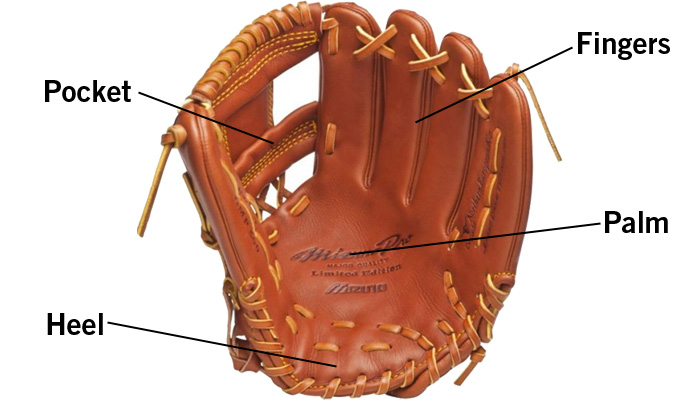 the-different-parts-of-a-baseball-softball-glove