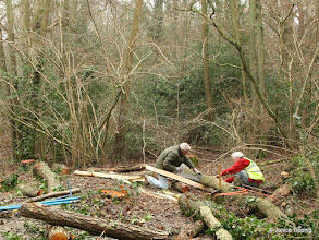 Photo: Michael and Stuart prepare wood to create a fence to manage trampling in sensitive parts of the wood