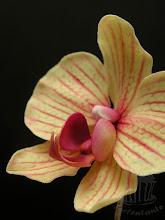 Photo: Phalaenopsis Orchidee aus Zucker