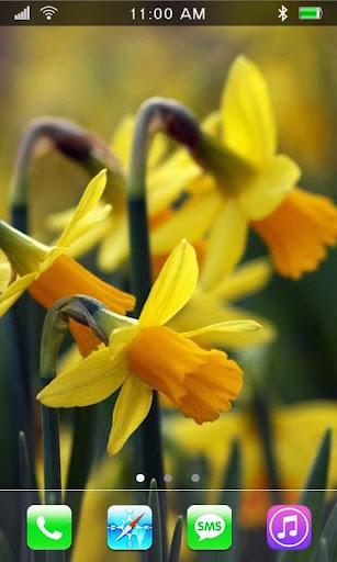 Wild Narcissus live wallpaper