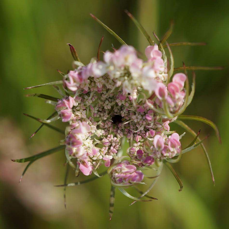 bloemknop
