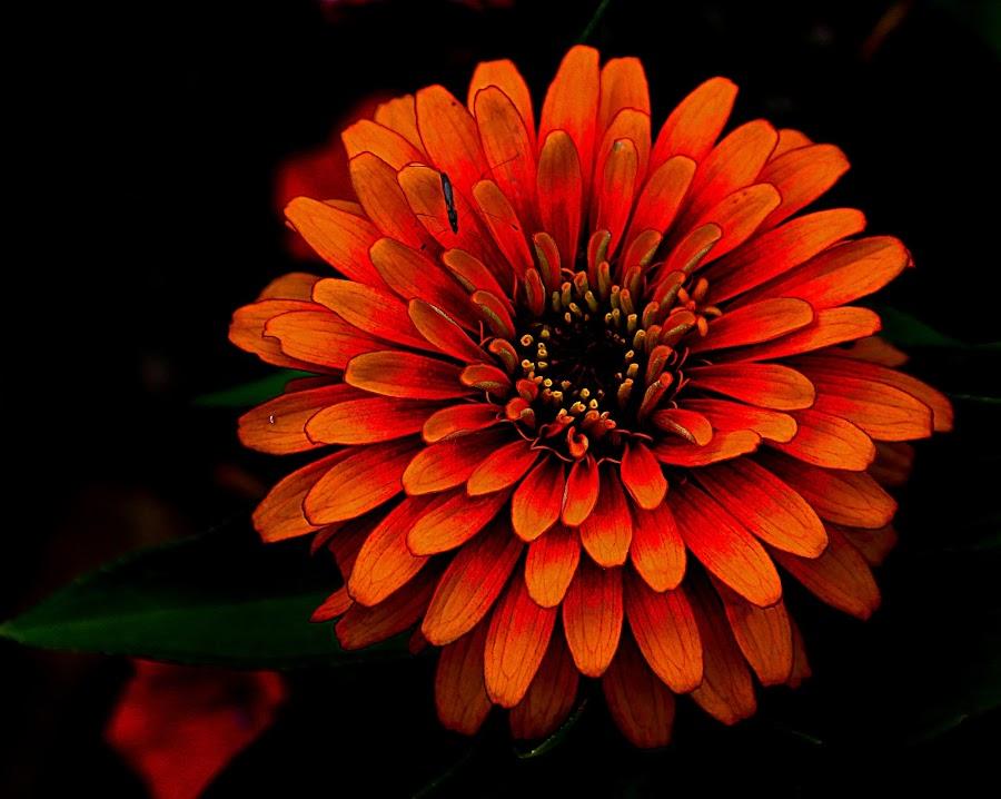 by Karen McKenzie McAdoo - Nature Up Close Flowers - 2011-2013