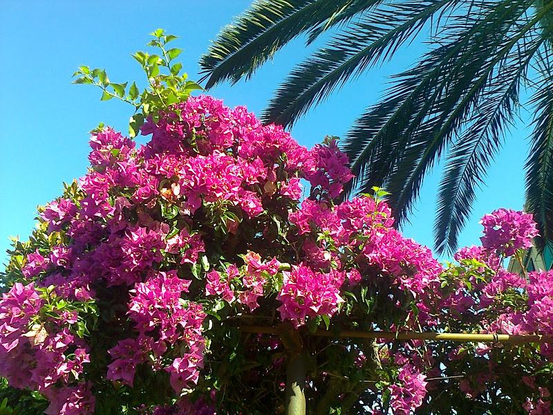 Fiori rosa sotto il cielo azzurro di TT
